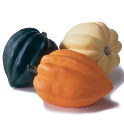ING-acorn-squash-main