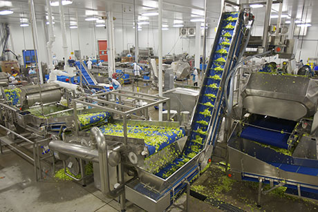 vegetable_processing_facility.jpg